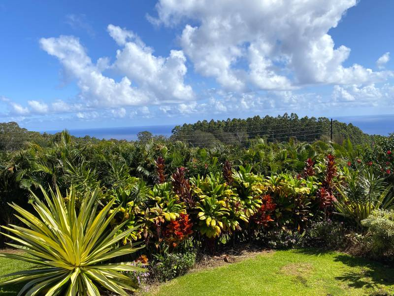 ocean views in the distance and tropical plants