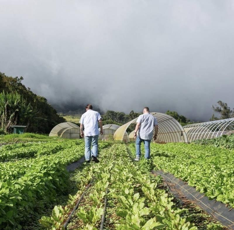 vegetables grown at hokulia big island