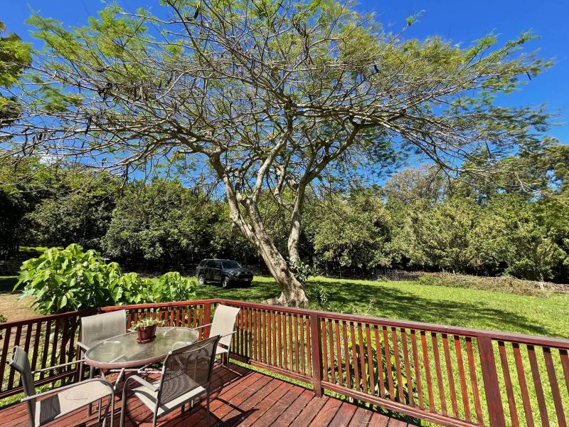 Macadamia nut orchard viewed from lanai