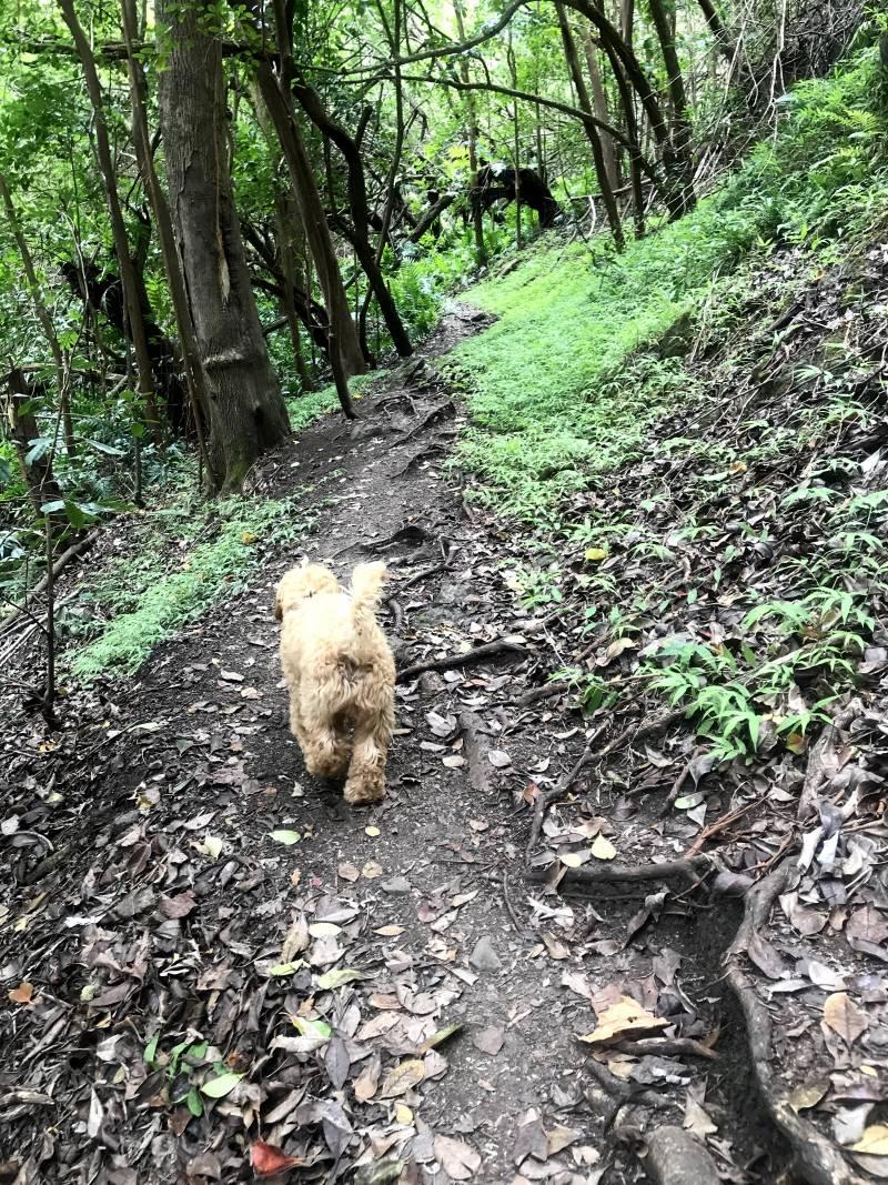 hiking near honolulu oahu in makiki