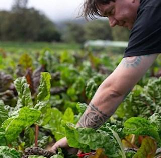 chef damskey picks fresh organic vegetables at the club at hokulia