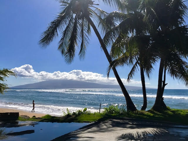 palm trees silhouetted in foreground with west maui beach in background