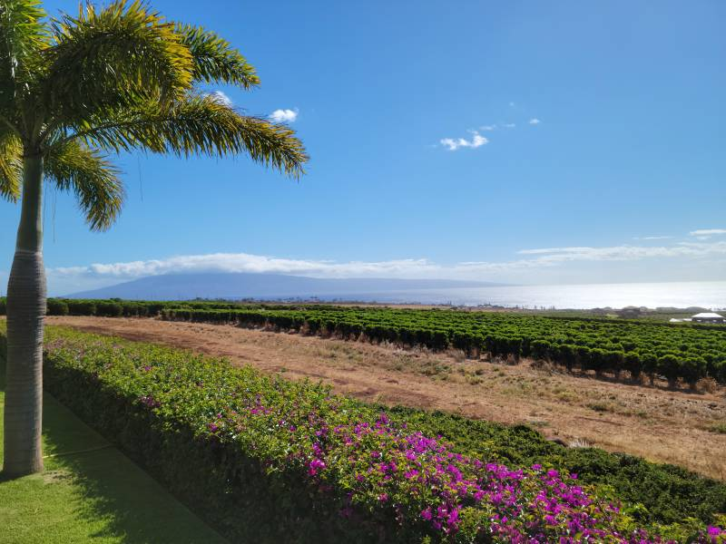Views from the Kaanapali hillside