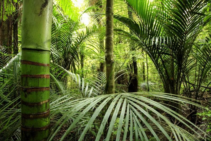 puna big island tropical plants