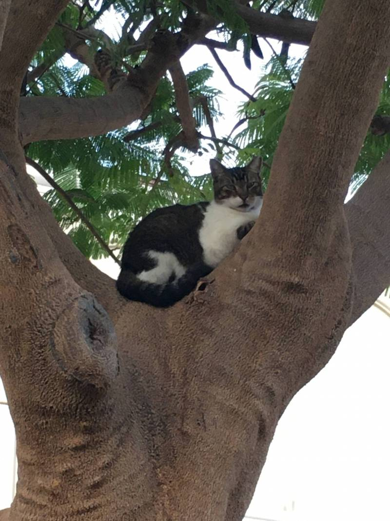 cat lounging in a tree