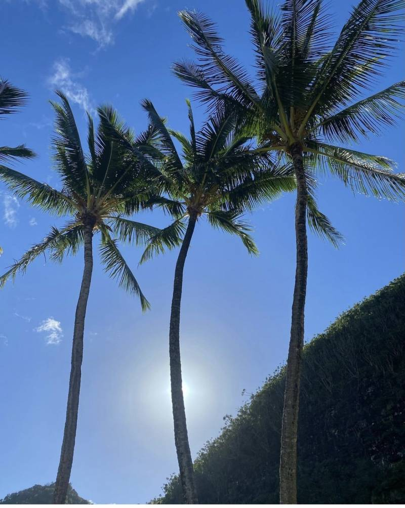sun peeking through three palm trees