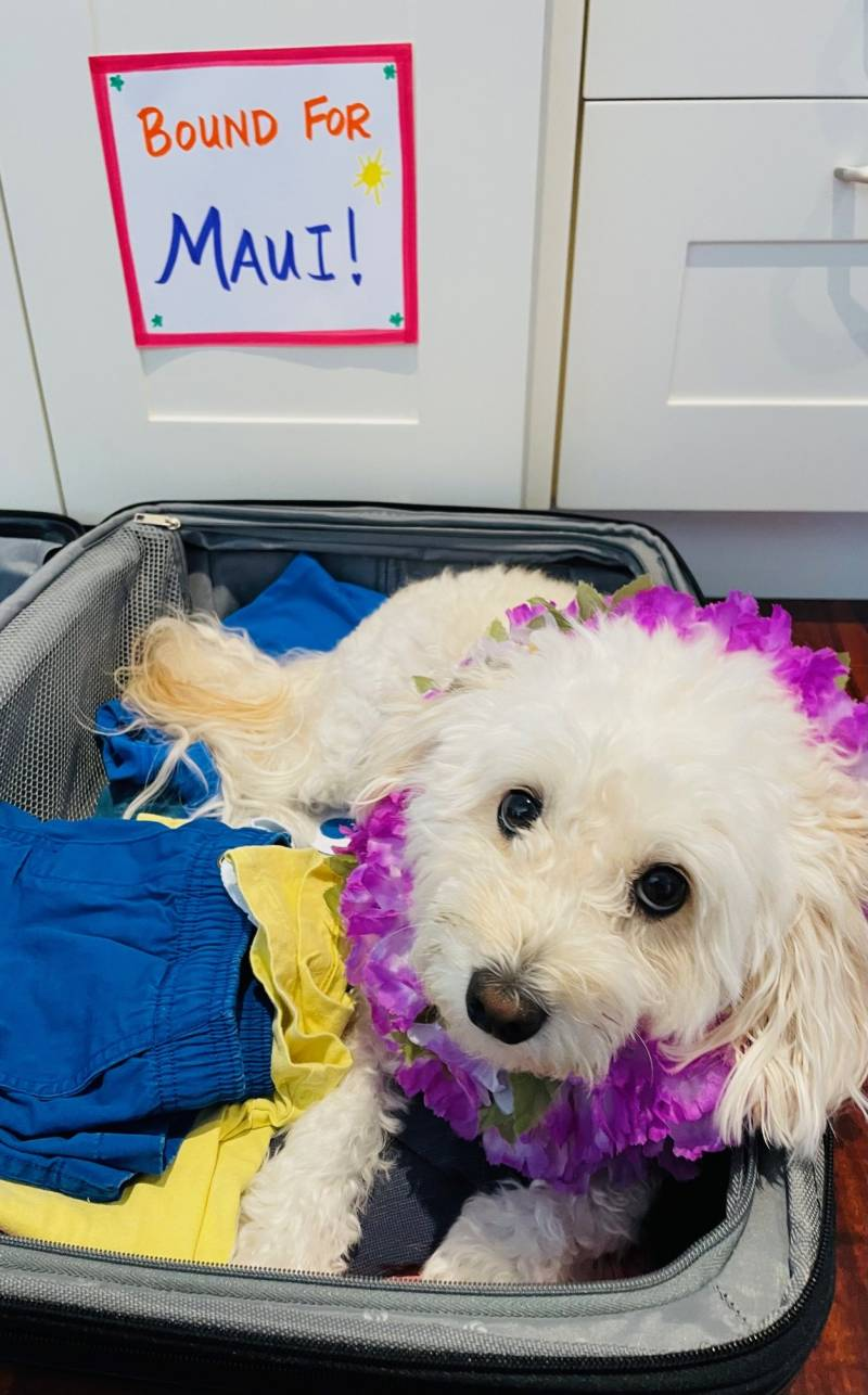 moving dogs to hawaii