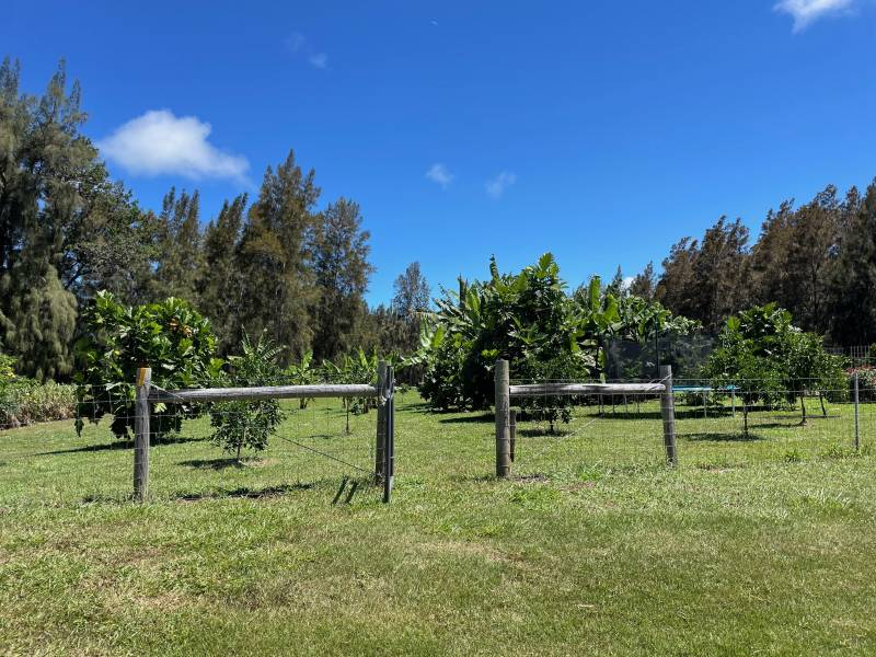 Orchard on big island horse property