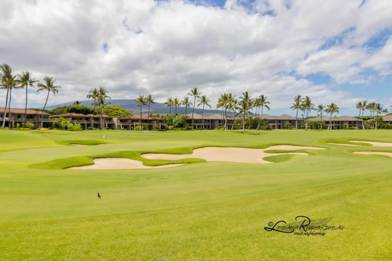 big island golf course