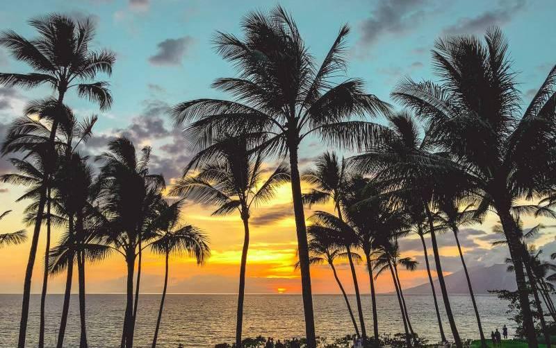 palm trees on maui